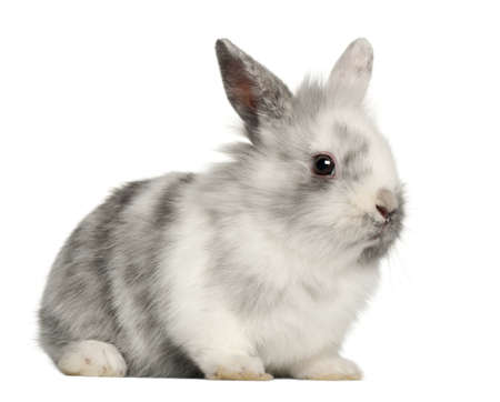 Rabbit sitting in front of white background Stock Photo - 13587972