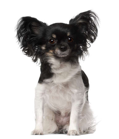 Crossbreed dog sitting in front of white background photo
