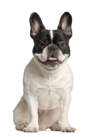 portrait view: Portrait of French Bulldog, 2 years old, sitting in front of white background