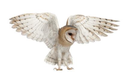 buhos: Lechuza común, Tyto alba, 4 meses de edad, volando contra el fondo blanco Foto de archivo