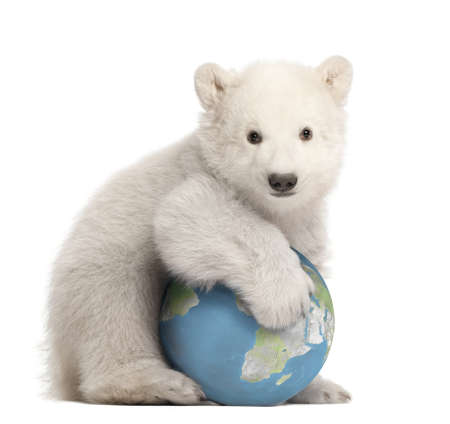 Polar bear cub, Ursus maritimus, 3 months old, with globe sitting against white background photo