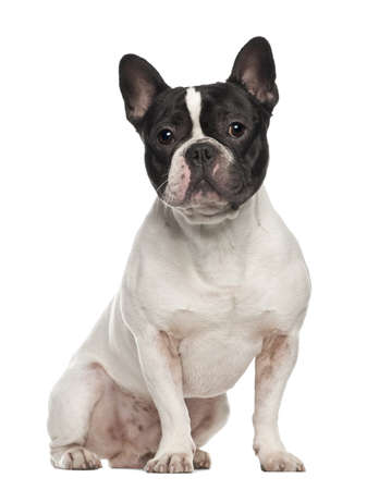 French Bulldog, 18 months old, sitting against white background photo