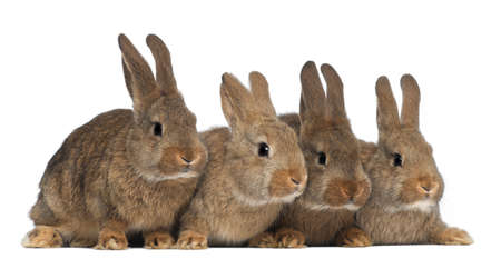 Four rabbits against white background photo