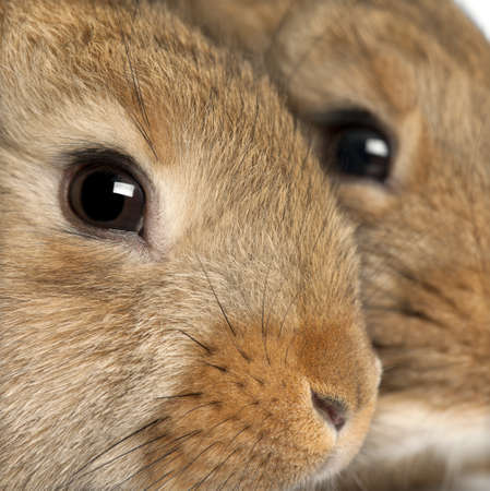 rabbits: Close-up of two rabbits heads Stock Photo