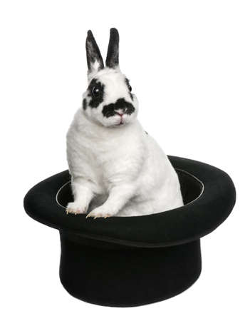 rabbit standing: Dalmatian Rabbit standing in magicians top hat, against white background