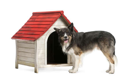 kennel: Border Collie standing next to a kennel against white background
