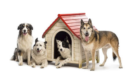 Group of dogs in and surrounding a kennel against white background photo