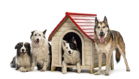 kennel: Group of dogs in and surrounding a kennel against white background
