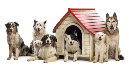 medium shot: Group of dogs in and surrounding a kennel against white background