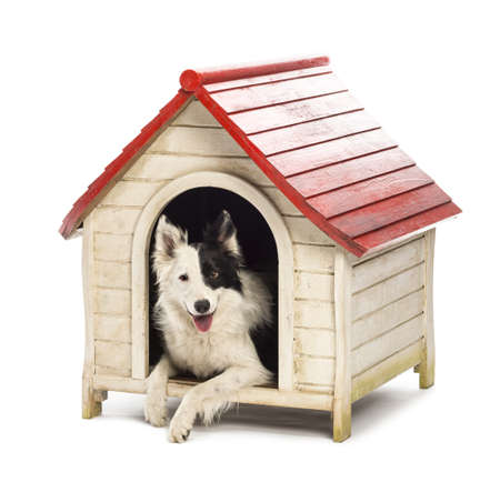 dog kennel: Border Collie in a kennel against white background