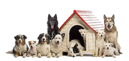dog kennel: Large group of dogs in and surrounding a kennel against white background