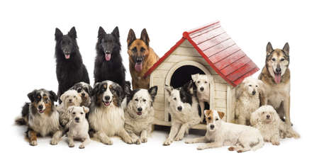 surrounding: Large group of dogs in and surrounding a kennel against white background