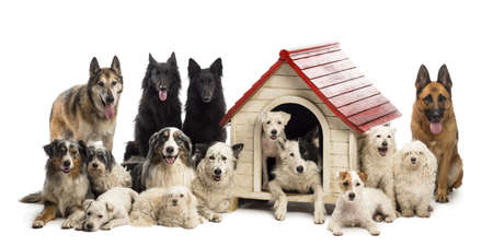 Large group of dogs in and surrounding a kennel against white background photo