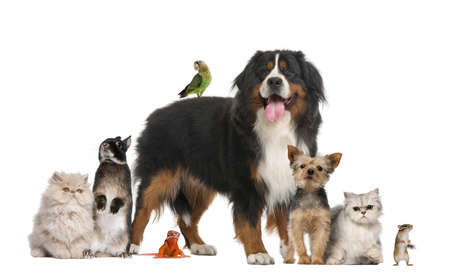 Group of pets Stockfoto