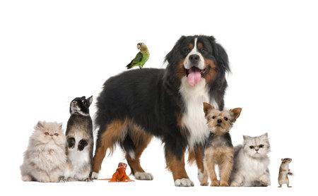 Group of pets Standard-Bild