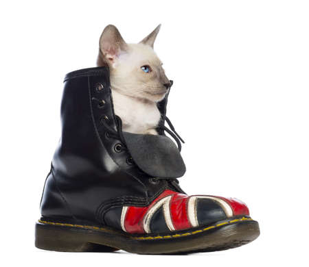 Oriental Shorthair kitten sitting in boot with Union Jack against white background photo