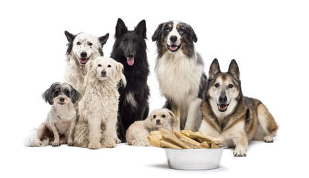 Group of dogs with a bowl full of bones in front of them sitting against white background photo