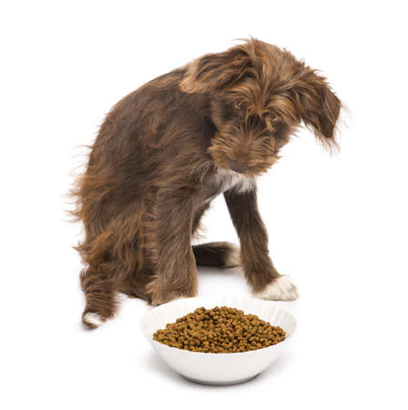 Crossbreed, 5 months old, sitting behind a bowl full of dog food against white background photo