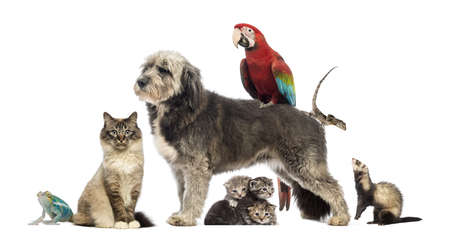 group shot: Group of pets,Group of pets - Dog, cat, bird, reptile, rabbit, isolated on white Stock Photo