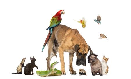 fighting dog: Gruppo di animali domestici insieme isolato su bianco