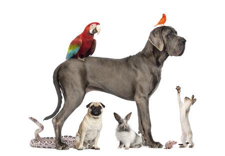 애완 동물의 그룹 - 개, 고양이, 새, 파충류, 토끼, 흰색으로 격리