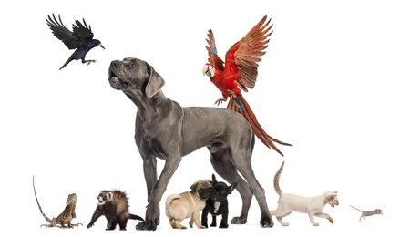 Groep huisdieren - Hond, kat, vogel, reptiel, konijn, geïsoleerd op wit Stockfoto