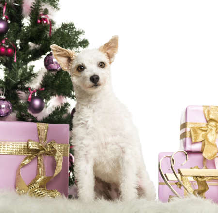 Crossbreed dog sitting in front of Christmas decorations against white background Stock Photo - 19011730