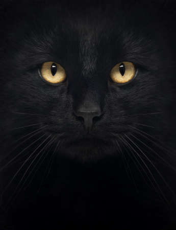 front facing: Close-up of a Black Cat looking at the camera, isolated on white