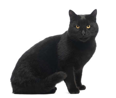 smiling cat: Black Cat sitting, smiling and looking at the camera, isolated on white