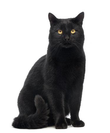검은 고양이는 흰색에 고립 앉아 카메라를 찾고