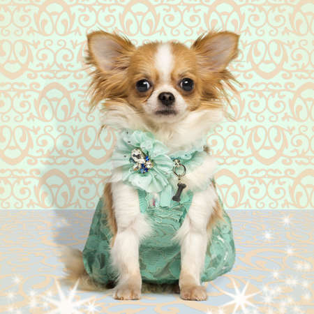 perros vestidos: Chihuahua con un vestido verde, sentado en el fondo de fantasía Foto de archivo