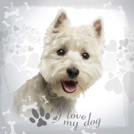 Close-up of a West Highland White Terrier panting, 18 months old, on designed background photo