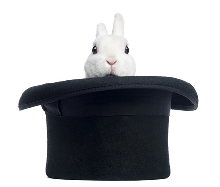 Mini conejo rex que aparece de un sombrero de copa, aislado en blanco Foto de archivo