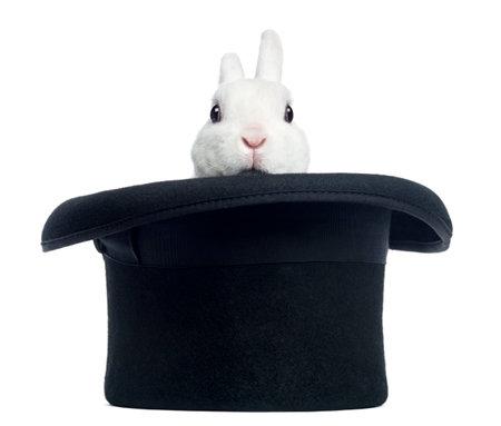 Mini rex konijn blijkend uit een hoge hoed, geïsoleerd op wit