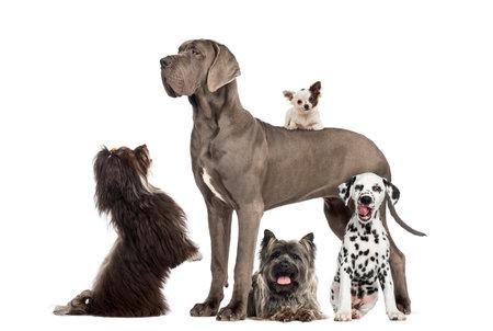 犬のグループ