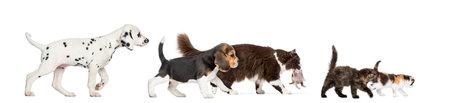 Gruppe von Katzen und Hunden zu Fuß Standard-Bild - 27015619