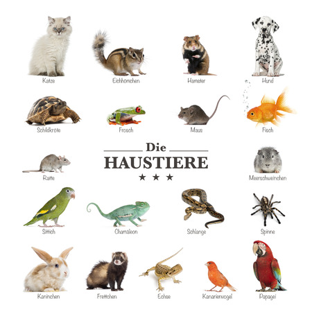 poster of pets in german Stock Photo