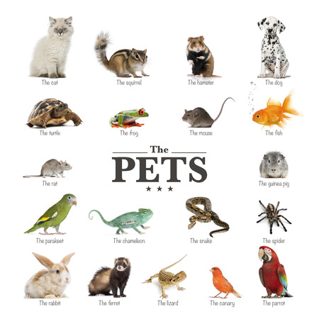 Affiche des animaux de compagnie en anglais Banque d'images - 27339564