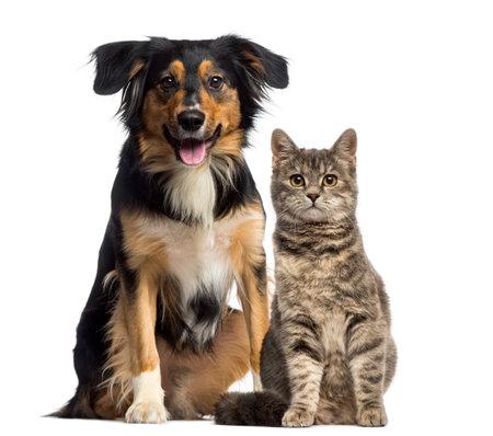 고양이와 개는 함께 앉아 스톡 콘텐츠