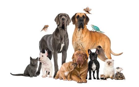 애완 동물의 그룹 - 흰색에 고립 된 개, 고양이, 조류, 파충류, 토끼,