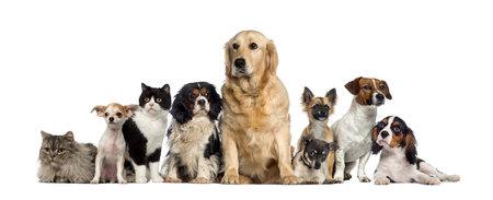 Gruppo di cani e un gatto Archivio Fotografico - 31642943