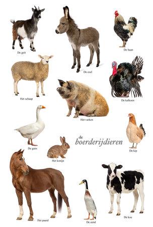 Educatieve poster met boerderij dieren in het Nederlands