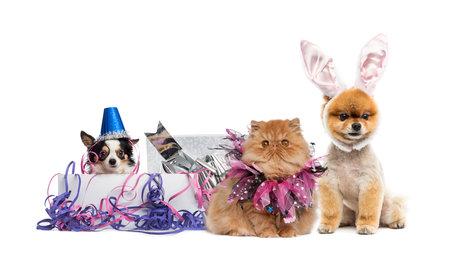 Los perros y un gato de fiesta