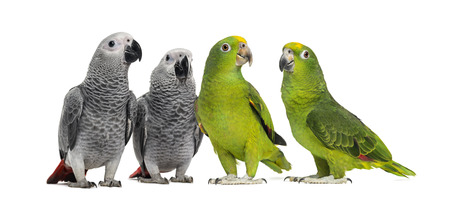 Group of parrots