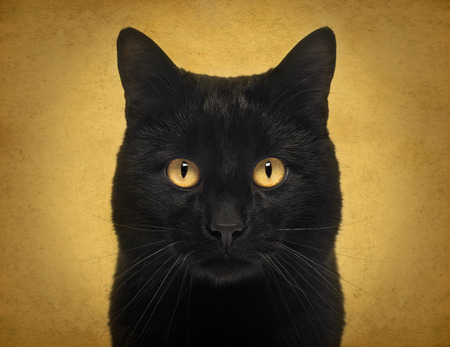 Close-up of a Black Cat looking at the camera, on orange background Archivio Fotografico