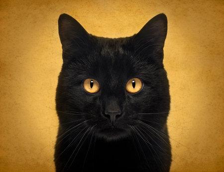 Close-up of a Black Cat looking at the camera, on orange background Reklamní fotografie