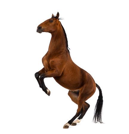 Andalusian horse rearing Archivio Fotografico