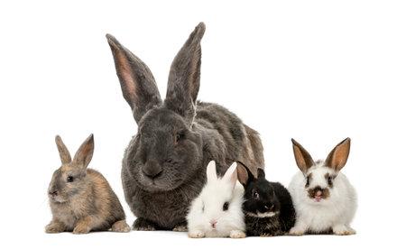 白い背景の前でウサギ