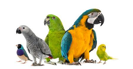 Goup de perroquets devant un fond blanc Banque d'images - 42671122