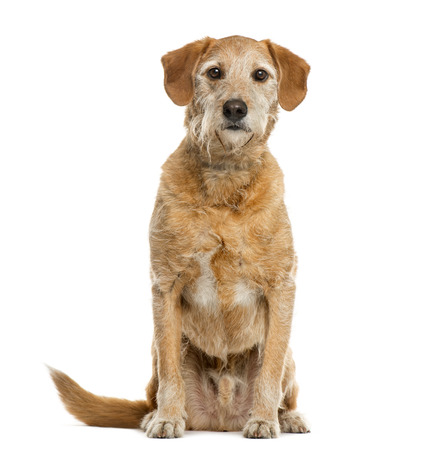 Crossbreed in front of white background